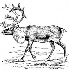 deer rangier tarandus vector image vector image