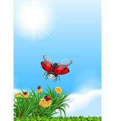 Ladybug flying in the garden vector image