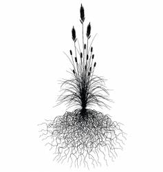 Grass with roots vector