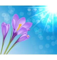 Crocus flower background vector