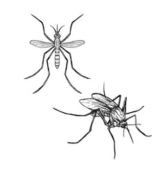 Hand drawn set of mosquito realistic sketches vector
