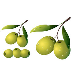 Olives with leaves on white vector