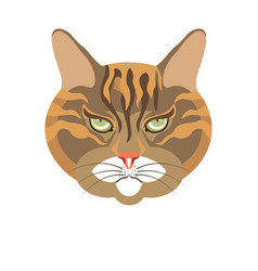 Abyssinian old cat colorful portrait isolated on vector