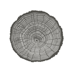 tree rings isolated vector image