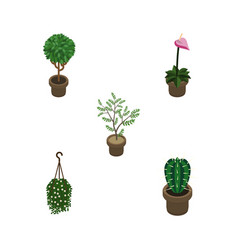 Isometric flower set of peyote fern grower and vector