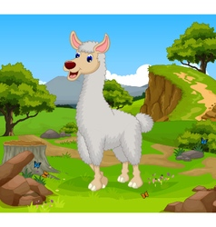Funny lama cartoon in the jungle vector