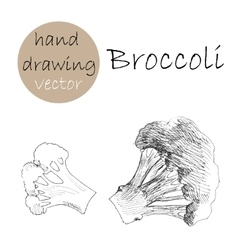 Hand drawn broccoli monochrome sketch vector