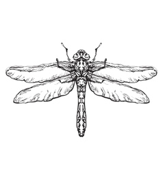 Dragonfly Black insect sketch vector image