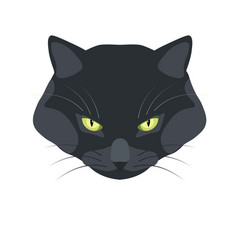 Bombay black cat breed close-up portrait on white vector