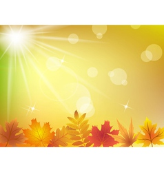 Autumn leaves in sunlight background vector