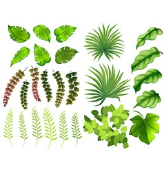 Different kinds of leaves vector image vector image