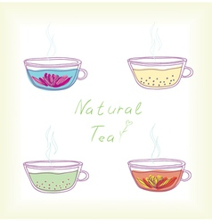 natural tea vector image