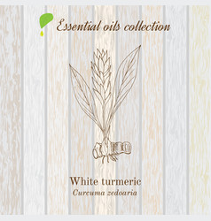 Pure essential oil collection turmeric wooden vector