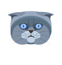 Highland scottish fold britain breed of grey cat vector