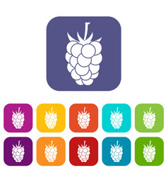 Blackberry fruit icons set flat vector