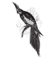 Cockatiel vintage vector