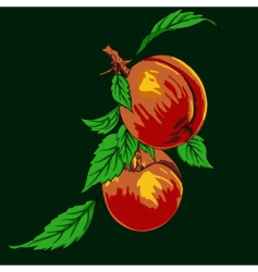 peaches vector image