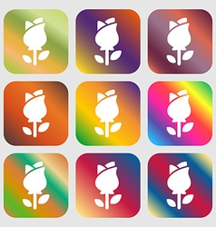 Rose icon sign nine buttons with bright gradients vector