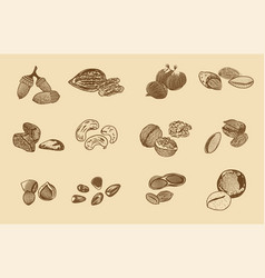 natural organic nuts elements collection vector image