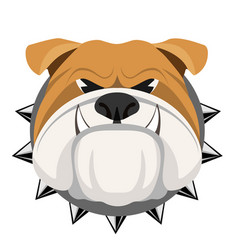 angry bulldog face in metal collar vector image vector image