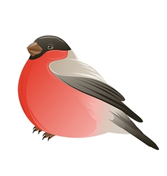 Bullfinch bird on a white background vector