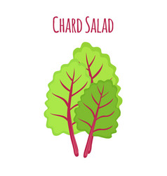 chard salad leaf of swiss plant vector image