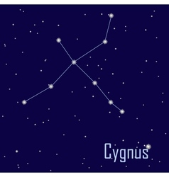 The constellation Cygnus star in the night sky vector image