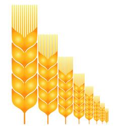 Field ripe wheat vector