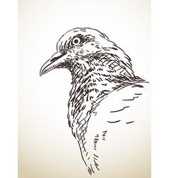 Dove bird vector