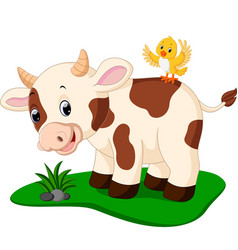 cute cow cartoon vector image