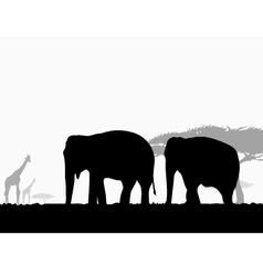 Elephants in africa safari vector