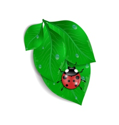Green leaves with ladybird and water drops vector