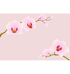 Tender orchid vector image vector image
