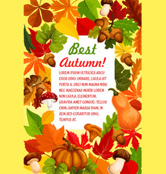 Autumn leaf and pumpkin banner for fall season vector
