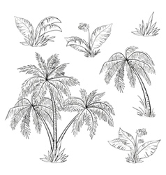 Palm trees flowers vector