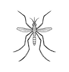 Hand drawn sketch of mosquito top view vector