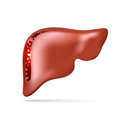 human liver with gear and cogwheel vector image