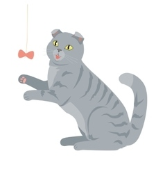 Scottish fold isolated breed of domestic cat vector