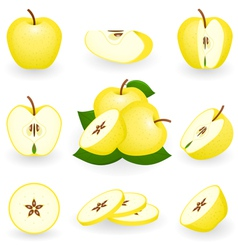 golden apple vector image vector image