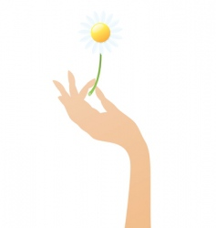 hand with daisy vector image