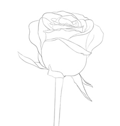 Black and white rose bud with stem flower isolated vector
