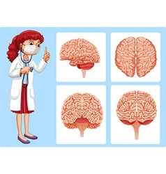 Doctor and brain diagrams vector image vector image