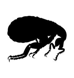 Flea silhouette vector
