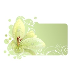 Beautiful frame with white lily vector