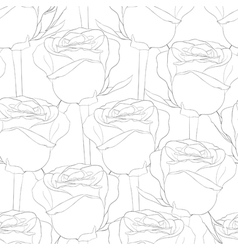seamless pattern in roses with contours vector image vector image