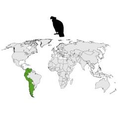 Andean condor distribution vector