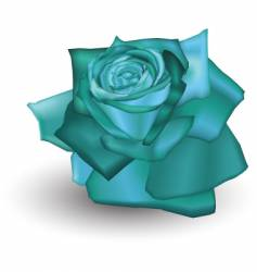 cyan rose vector image vector image