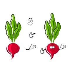 Cartoon pink radish vegetable character vector