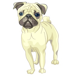 pug breed vector image