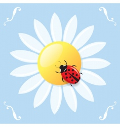 ladybird greeting card vector image vector image